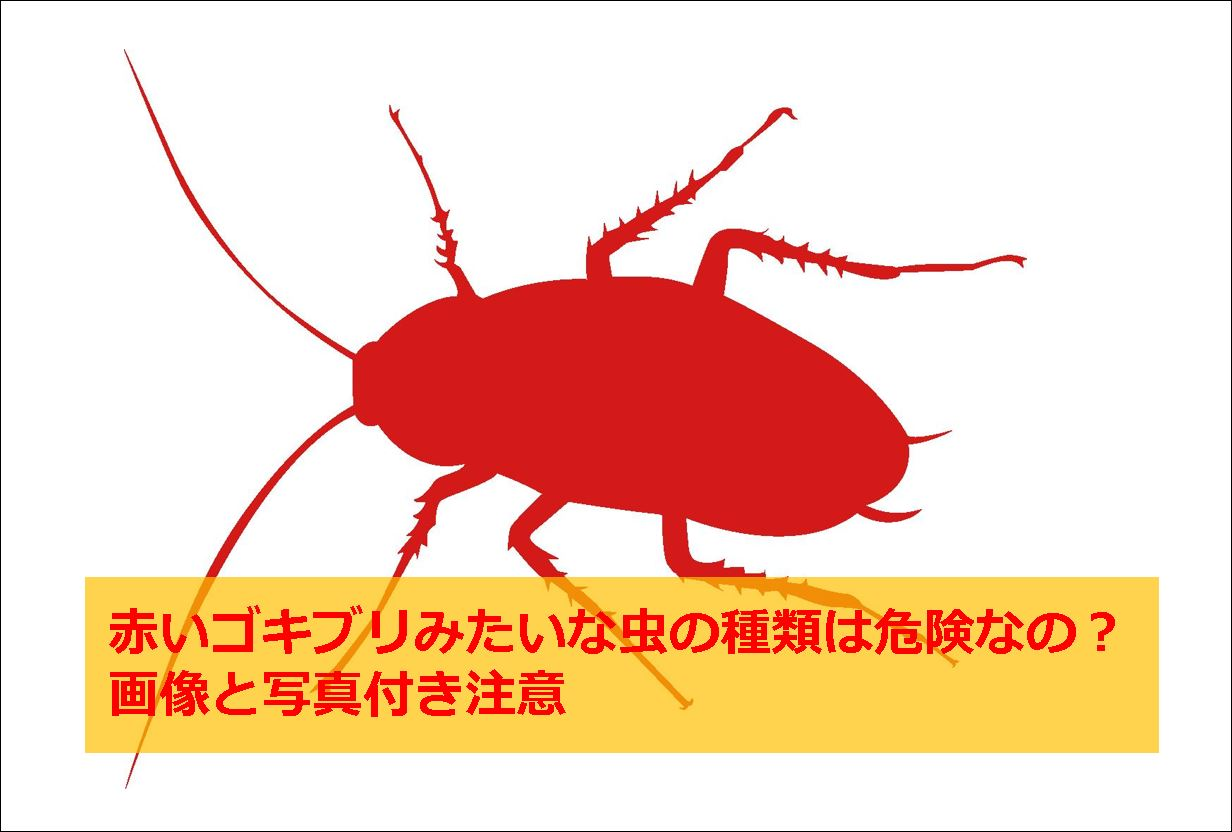 ゴキブリ 赤ちゃん