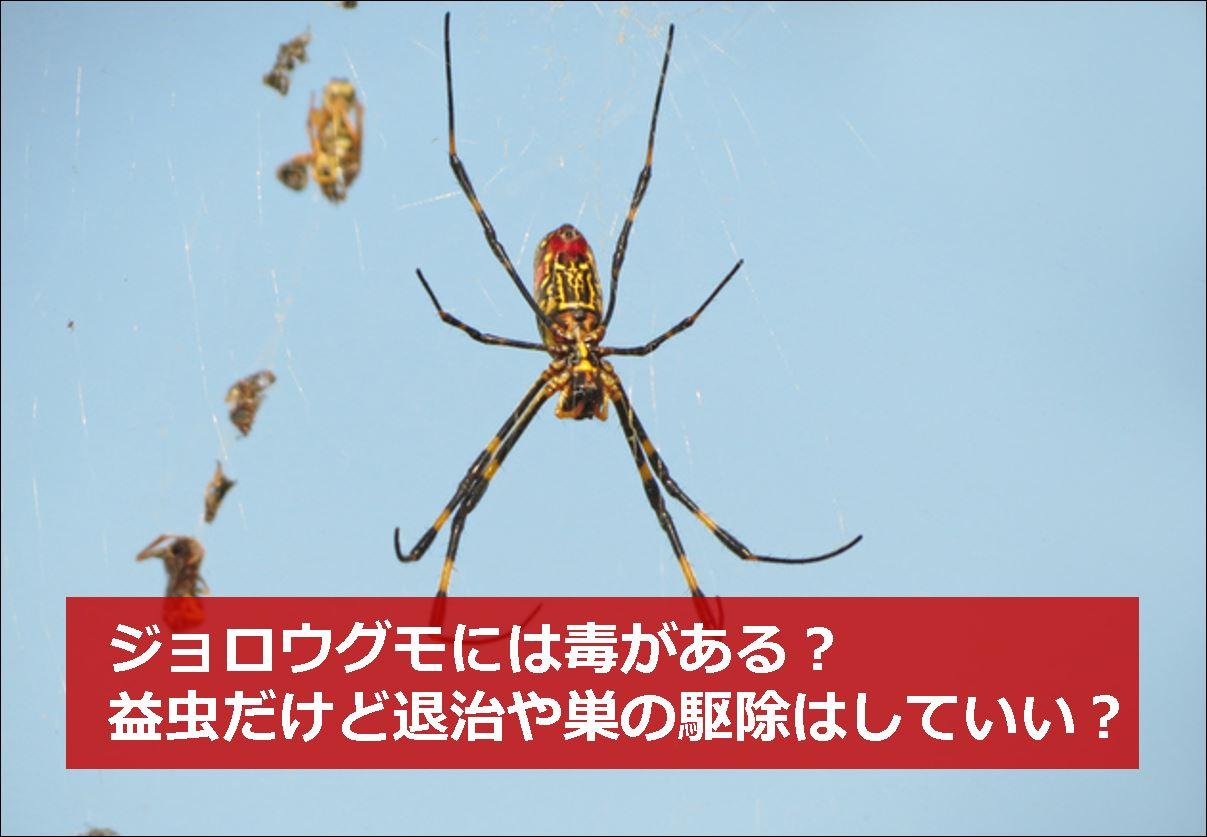 の 巣 退治 蜘蛛
