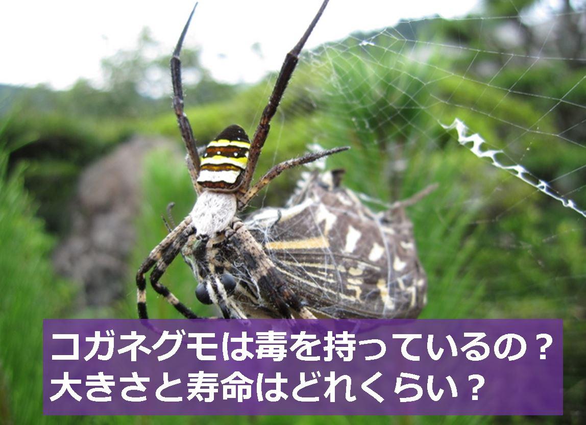 カブトムシの幼虫見分け方は?オスメス ...